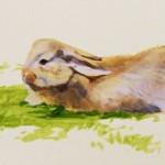 Mountainland Pediatrics mural of a rabbit
