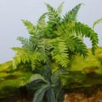 jungle fauna