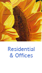 Boulder Murals Residential and Offices murals